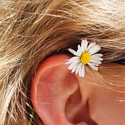 cropped-oreille-jf1.jpg